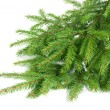 Spruce over white — Stock Photo #35036901