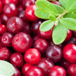 Organic cowberry — Stock Photo #39261519