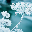 frozen flower — Stock Photo
