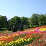 Spring Park — Stock Photo #17136727