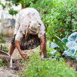 Old woman in the garden, weeding - Lizenzfreies Foto