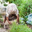Old woman in the garden, weeding - Stok fotoğraf