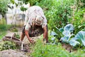 Old woman in the garden, weeding — Stock fotografie