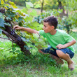 Cute boy picking grapes from vine — Stock Photo #12900470