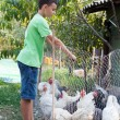 Stock Photo: Country boy feeding chickens