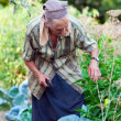 Senior woman in the vegetable garden - Stockfoto