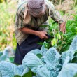 Senior woman in the vegetable garden — Stock Photo
