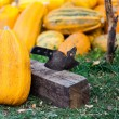 A pile of pumpkins — Stock Photo