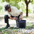 Senior man collecting plums — Stock Photo #12900638
