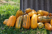 A pile of orange pumpkins in grass — Stock Photo