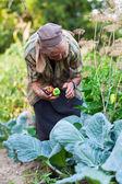 Senior woman in the vegetable garden — Stock Photo