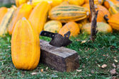 Un mucchio di zucche — Foto Stock