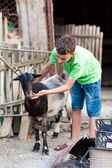 Schoolboy playing with goat — Stock Photo