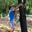 Happy child climbing in a tree — Stock Photo #13756417