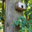 Bird house on a tree trunk - Stock Photo