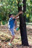 šťastné dítě lezení na stromě — Stock fotografie