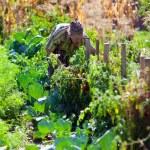 mulher de idade, trabalhando em seu jardim — Foto Stock