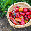 Closeup of a basket full of red peppers — Stok fotoğraf