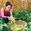 Young woman picking bean pods in the countryside - Stock Photo