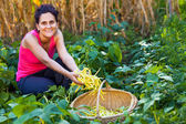 Young woman picking bean pods in the countryside — Stock Photo