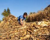 Child making stalks of stem after corn harvest — Stock Photo