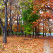 Footpath in the park -  