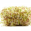 Various germ sprouts - Stock Photo