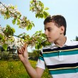 Kid in an orchard in the countryside — Stock Photo