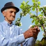 Senior farmer with an apple tree — Stock Photo #26658299