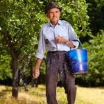 ������, ������: Old farmer fertilizing in an orchard