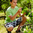 Teenage kid picking cherries — Stock Photo #26660303