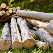 Beech logs — Stock Photo #30058553