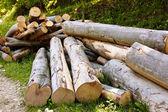 Beech logs — Stock Photo