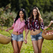 Women carrying baskets with apples — Stock Photo #32087021