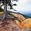Stock Photo: Marked tree on hiking trial in RuginoasPit