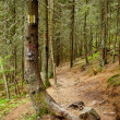 Marked tree on a hike trail — Stock Photo