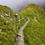 Mountain trail in fagaras mountains — Stock Photo