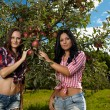 closeup of sexy women picking apples — Stock Photo