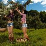 Sexy women picking apples — Stock Photo