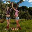 Sexy women picking apples — Stock Photo