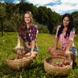 Beautiful women near baskets of apples — Stock Photo