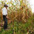Farmer cutting corn with reaping hook — Stockfoto #33713197