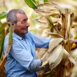 Farmer at corn harvest — Stock Photo