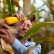 Stock Photo: Farmer harvesting corn and smoking