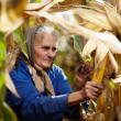 Stock Photo: Old female farmer at corn harvest