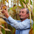 Farmer at corn harvest — Stock Photo #33714211