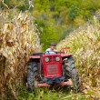 Stockfoto: Old farmer driving tractor in cornfield