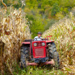 Stock Photo: Old farmer driving tractor in cornfield
