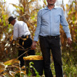 Stock Photo: Farmers at corn harvest