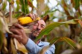 Farmer harvesting corn and smoking — Stock Photo